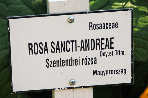 Klassifizierung der Rosen