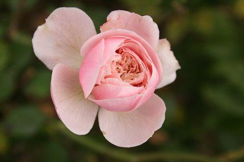 Virág Benedek emléke